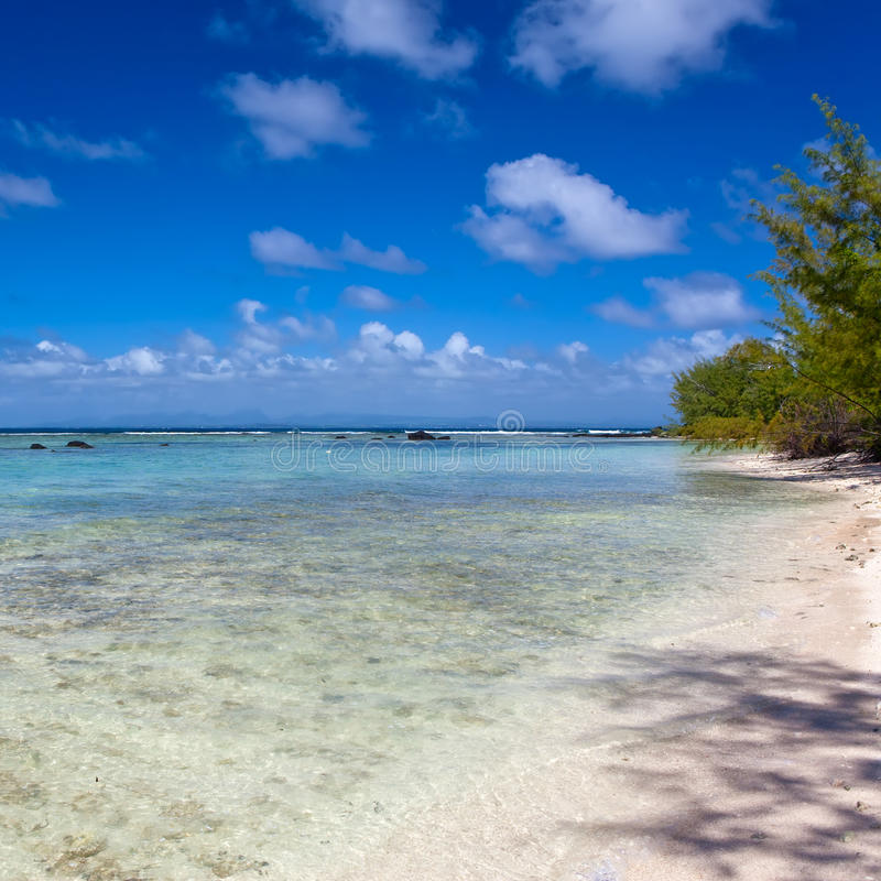 Gabriel. Mauritius. royalty free stock photography