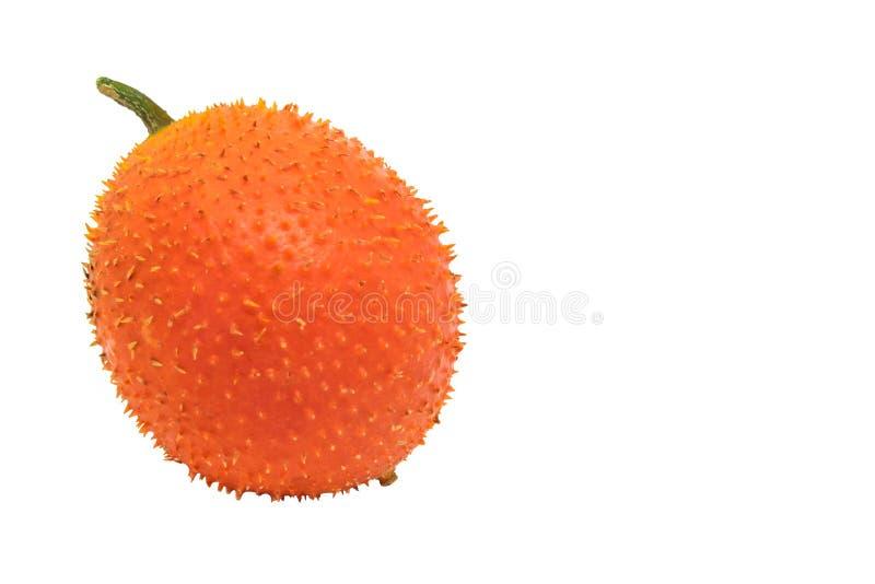 Gac果子或婴孩波罗蜜, Cochinchin金瓜,多刺的苦涩金瓜,在白色背景的甜金瓜 免版税库存图片