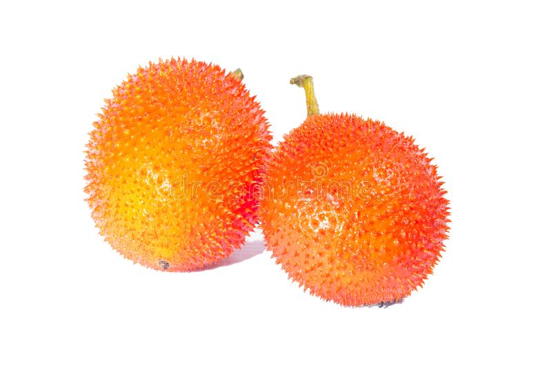 Gac, calabaza amarga espinosa del Jackfruit del bebé, calabaza dulce, Cochinchin G imagenes de archivo