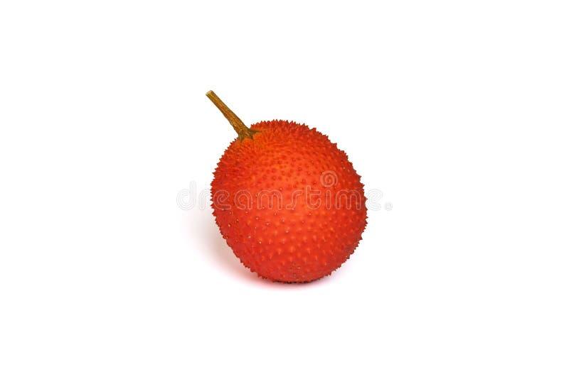 Gac isolato fruttifica su fondo bianco, frutta sana fotografia stock libera da diritti