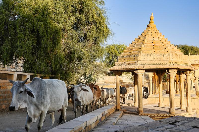 Gadi Sagar, Gadsisar Lake Jaisalmer, Ρατζαστάν, Βόρεια Ινδία στοκ φωτογραφίες με δικαίωμα ελεύθερης χρήσης
