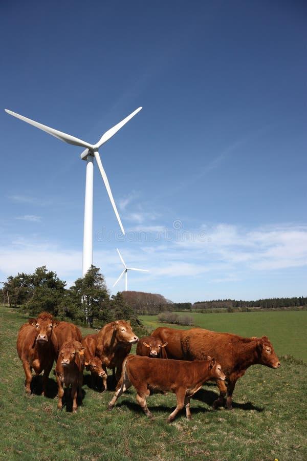 Gado e energia de vento imagem de stock royalty free