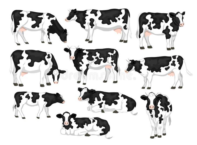 Gado remendado preto e branco da raça do revestimento do frisão de Holstein ajustado ilustração do vetor