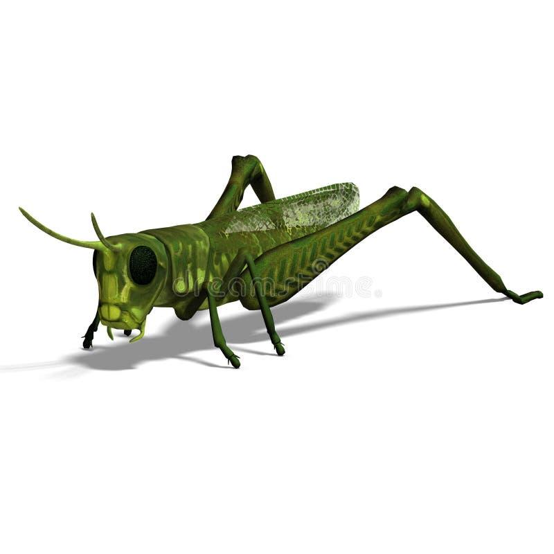 Gafanhoto verde ilustração do vetor