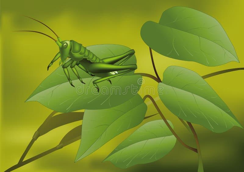 Gafanhoto verde ilustração royalty free