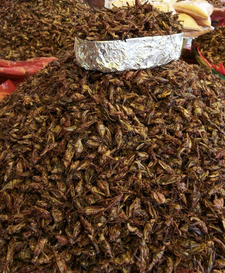 Gafanhotos fritados imagem de stock