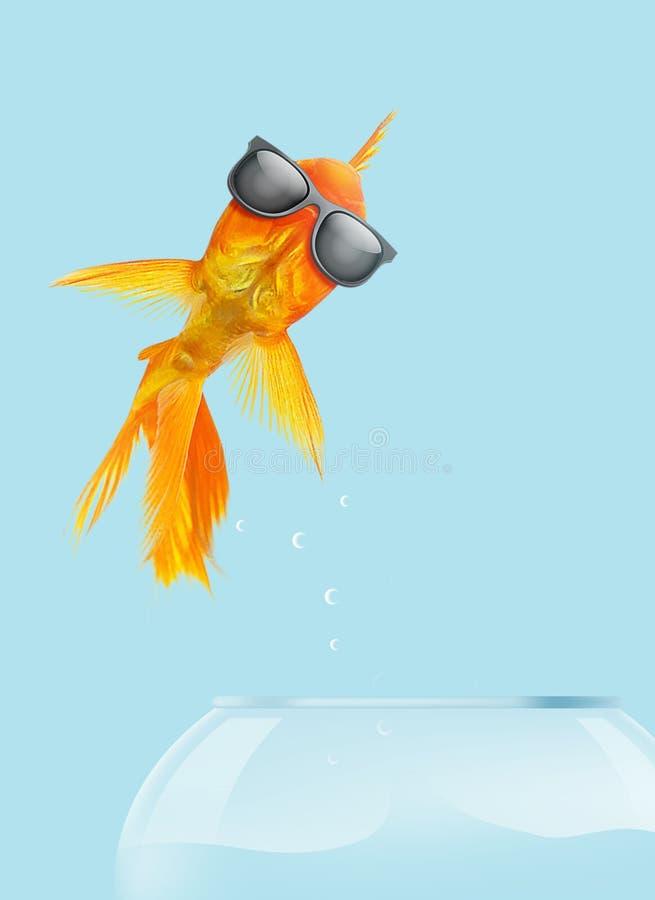 gafas de sol del desgaste del pez de colores del ejemplo 3D que saltan del fishbowl en fondo azul stock de ilustración