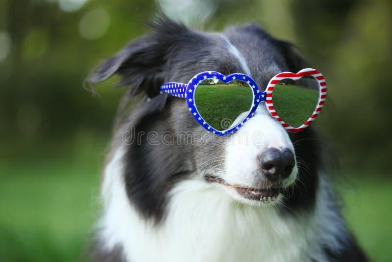 Gafas de sol en forma de corazón de la bandera americana del perro que llevan para el 4 de julio o Día del Trabajo fotografía de archivo