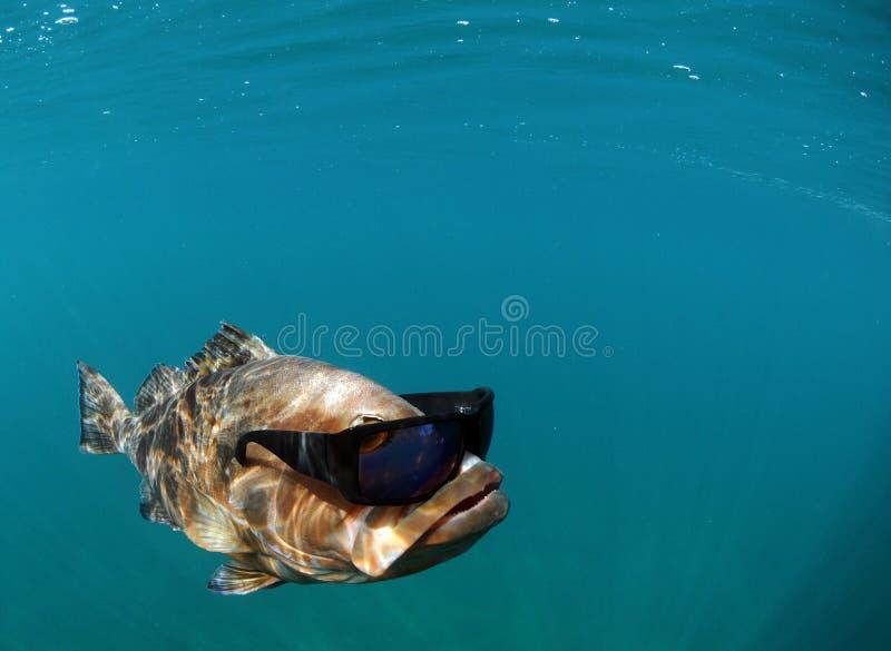 Gafas de sol que desgastan de los pescados frescos fotos de archivo