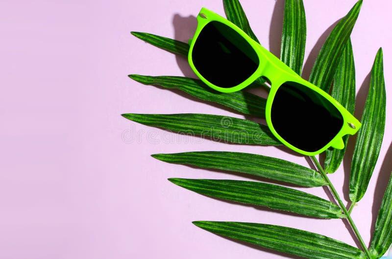 Gafas de sol verdes claras que ponen en una fronda de seda de la palma fotos de archivo libres de regalías