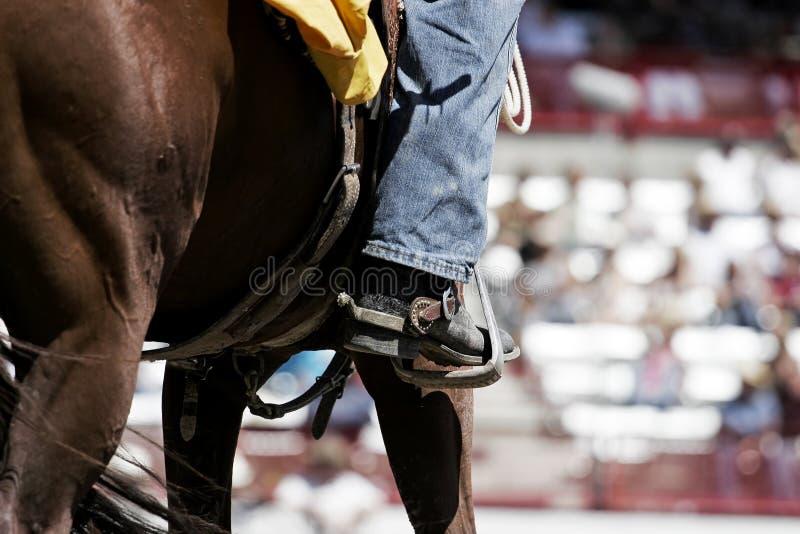 Gaine, dent, et cheval de rodéo photographie stock libre de droits