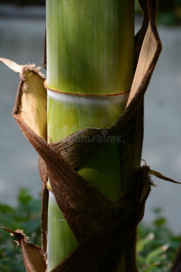 Gaine en bambou photographie stock libre de droits