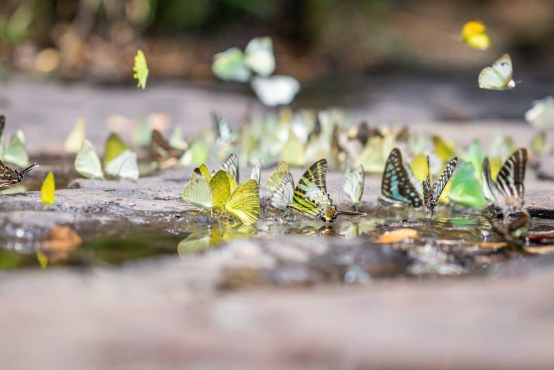 Gaio atado borrado e borboletas alaranjadas da gaivota na floresta verde fotos de stock royalty free