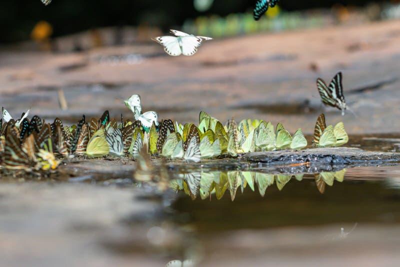 Gaio atado borrado e borboletas alaranjadas da gaivota na floresta verde fotos de stock