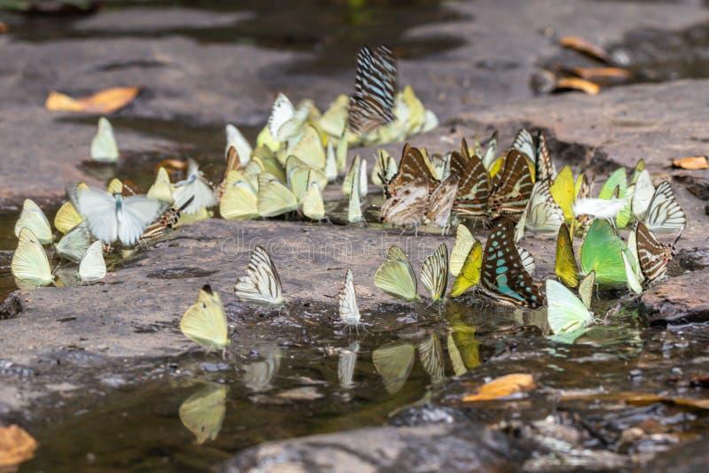 Gaio atado borrado e borboletas alaranjadas da gaivota na floresta verde fotografia de stock royalty free