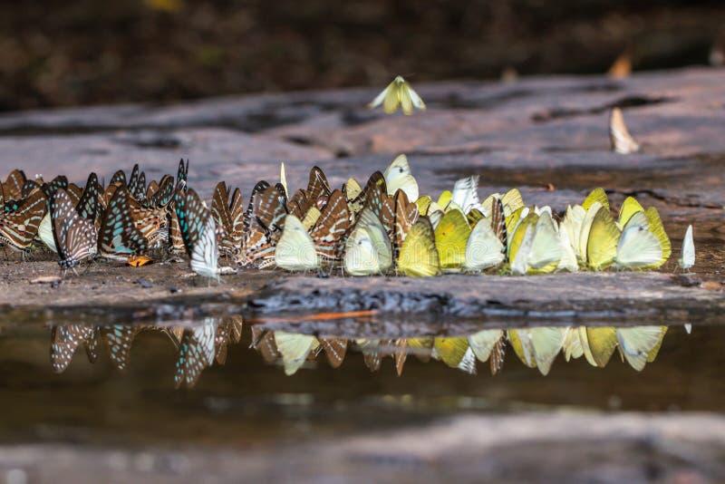 Gaio atado borrado e borboletas alaranjadas da gaivota na floresta verde imagem de stock