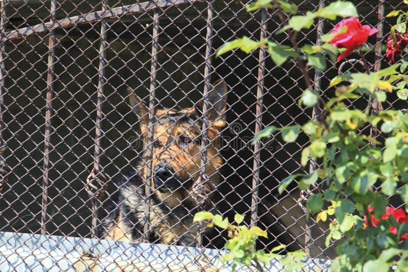 Gaiola do cão imagens de stock royalty free
