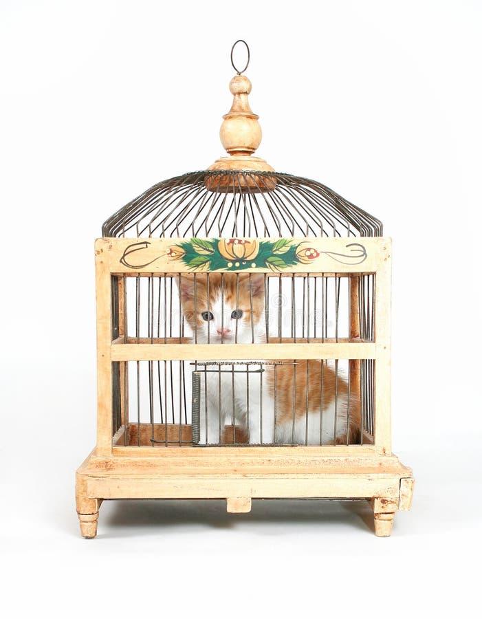 Gaiola do gatinho fotos de stock