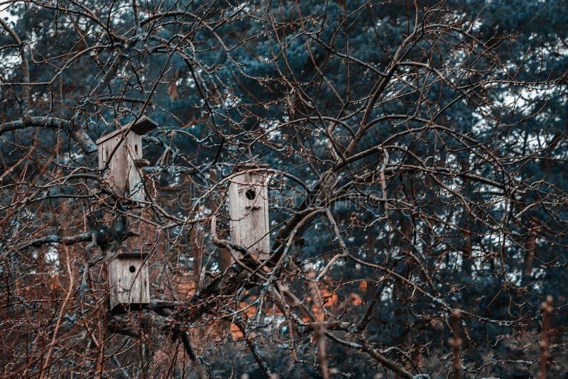 Gaiolas de pássaro em uma árvore imagem de stock