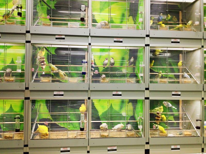 Gaiolas de pássaro na loja de animais de estimação imagens de stock royalty free