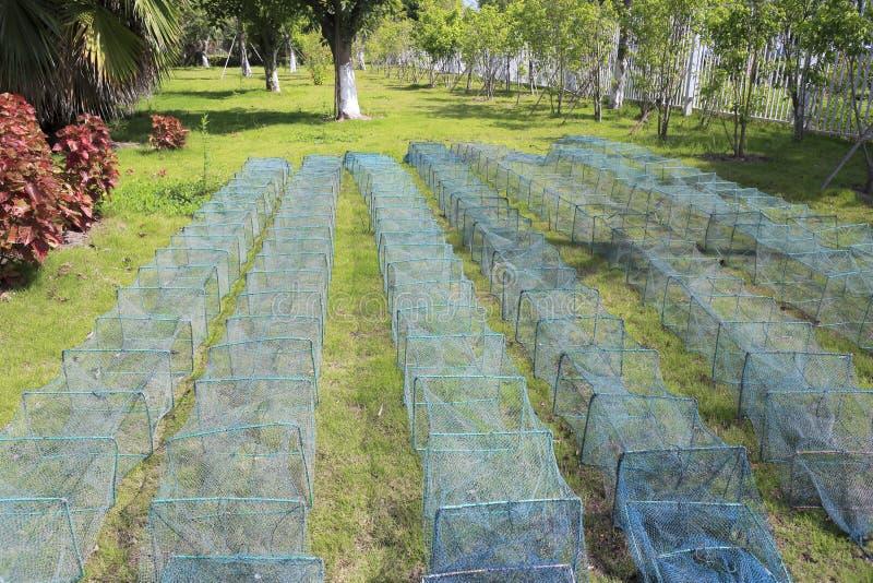 Gaiolas usadas travando caranguejos