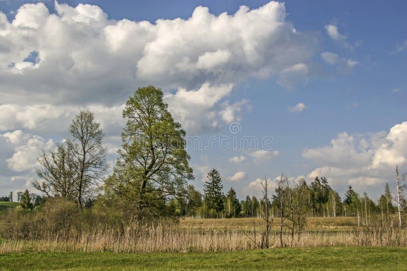 Gaissach amarrent au printemps photos stock