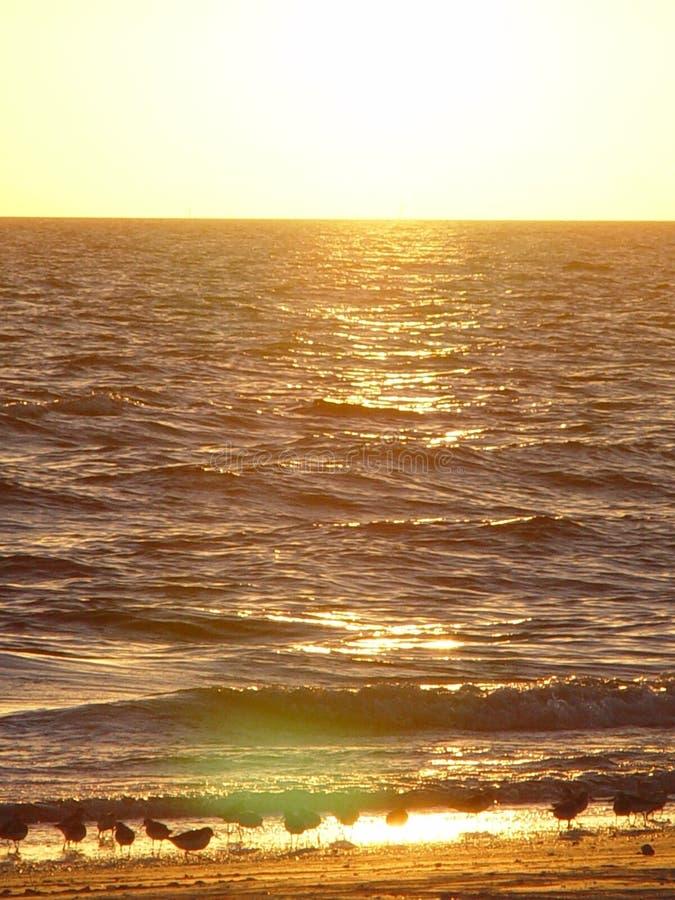Gaiteiros da areia no por do sol fotos de stock