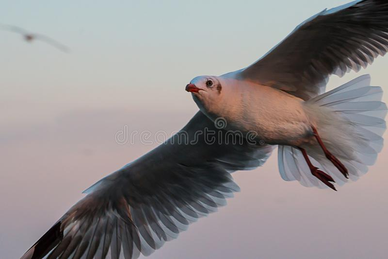 Gaivota foto de stock royalty free