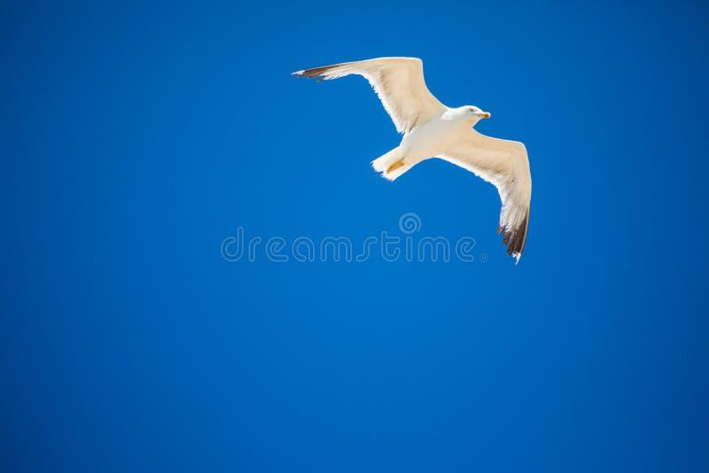 Gaivota branca em voo sobre a praia do oceano verão imagens de stock royalty free