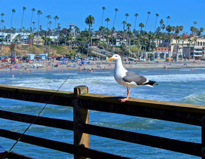 Gaivota Califórnia do cais de Manhattan Beach fotos de stock royalty free