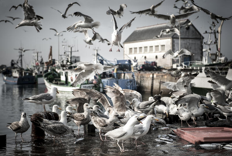Gaivota com fome dos pássaros foto de stock