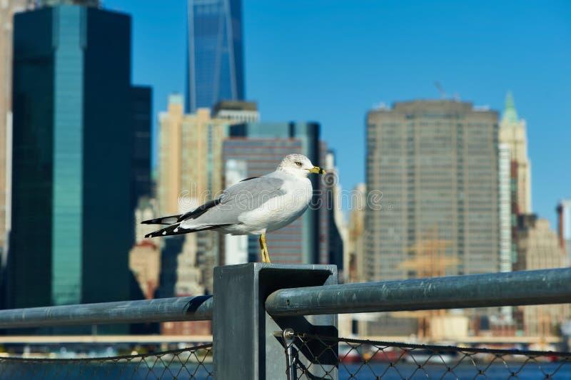 Gaivota com o Manhattan no fundo imagens de stock royalty free