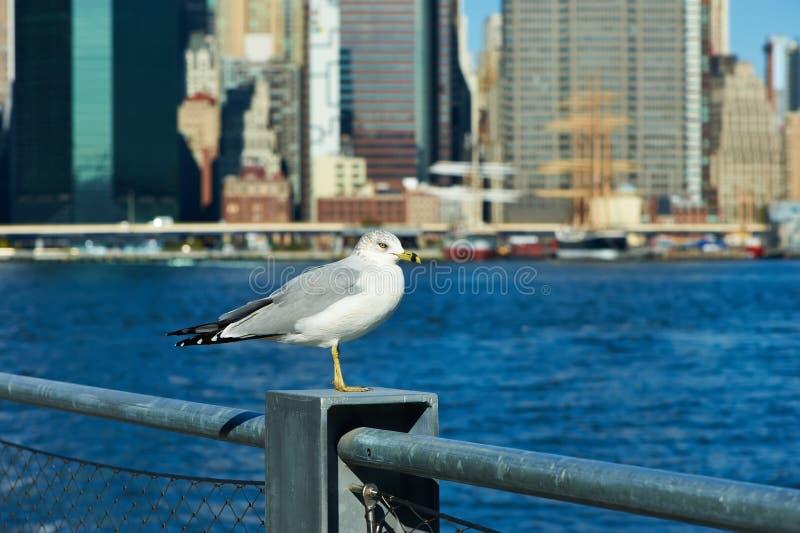 Gaivota com o Manhattan no fundo fotos de stock