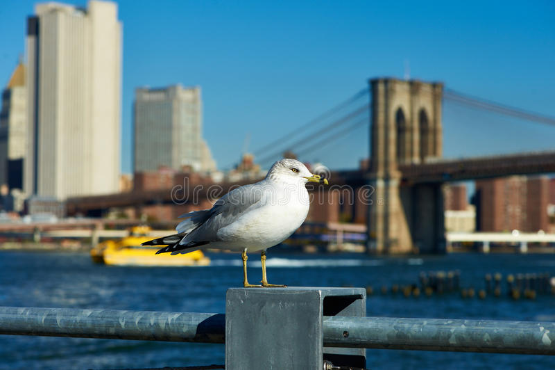 Gaivota com o Manhattan no fundo fotos de stock royalty free