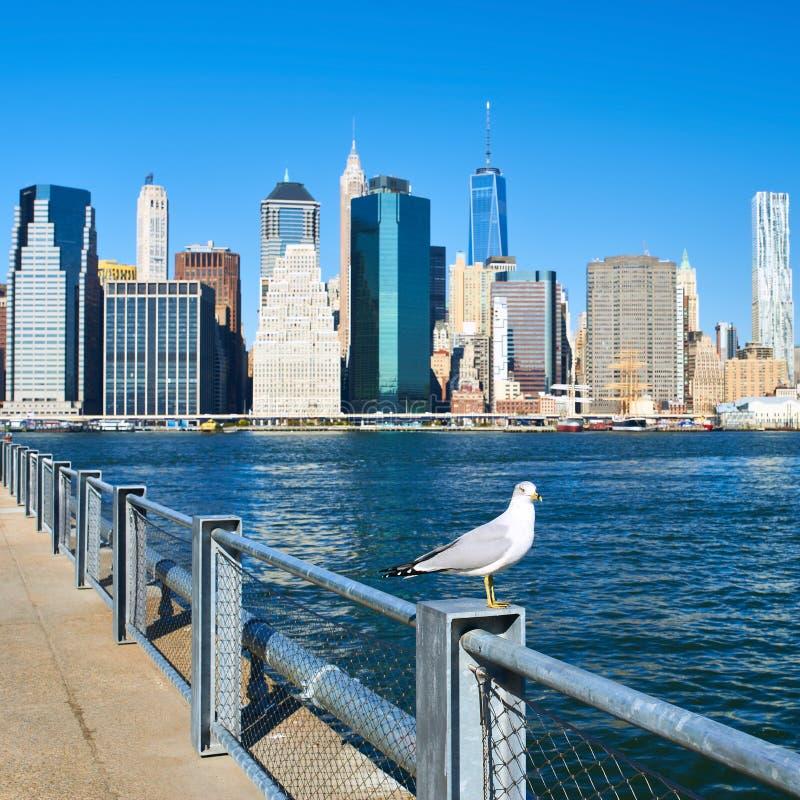 Gaivota com o Manhattan no fundo Foco no pássaro fotografia de stock royalty free