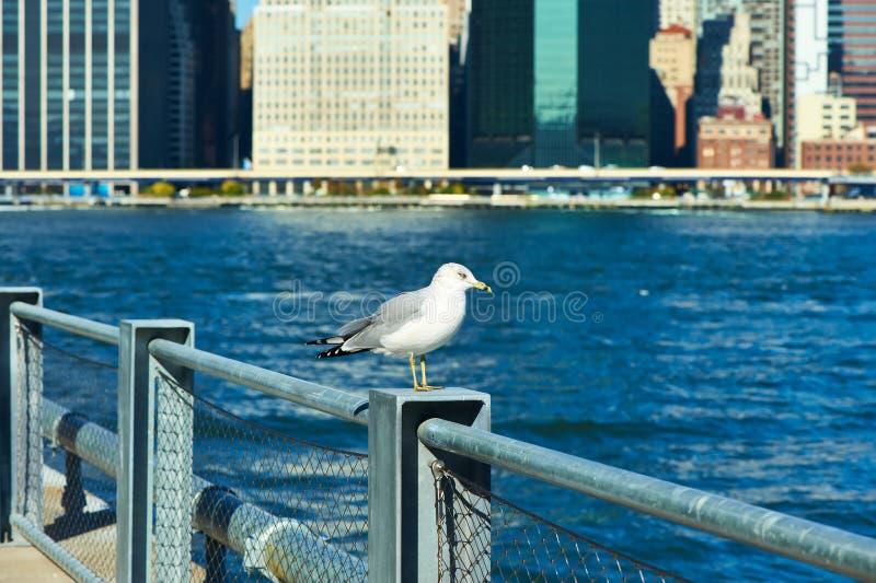 Gaivota com o Manhattan no fundo Foco no pássaro fotos de stock royalty free