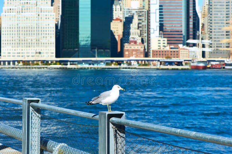 Gaivota com o Manhattan no fundo Foco no pássaro imagem de stock royalty free