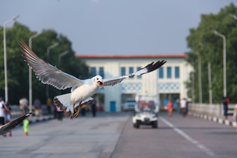 Gaivota da aterrissagem fotografia de stock royalty free