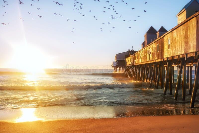 Gaivota de mar do p?ssaro nos raios de um sol dourado no Sandy Beach do Oceano Atl?ntico EUA maine imagens de stock