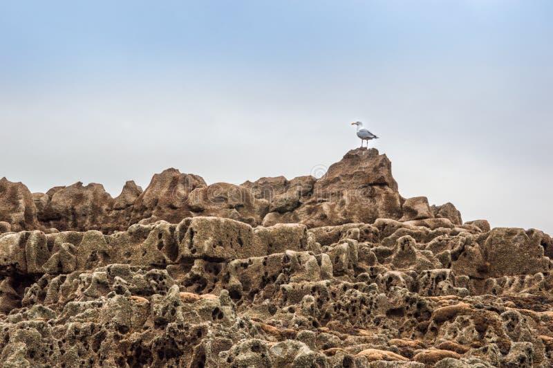 Gaivota de mar nas associações da rocha imagens de stock royalty free