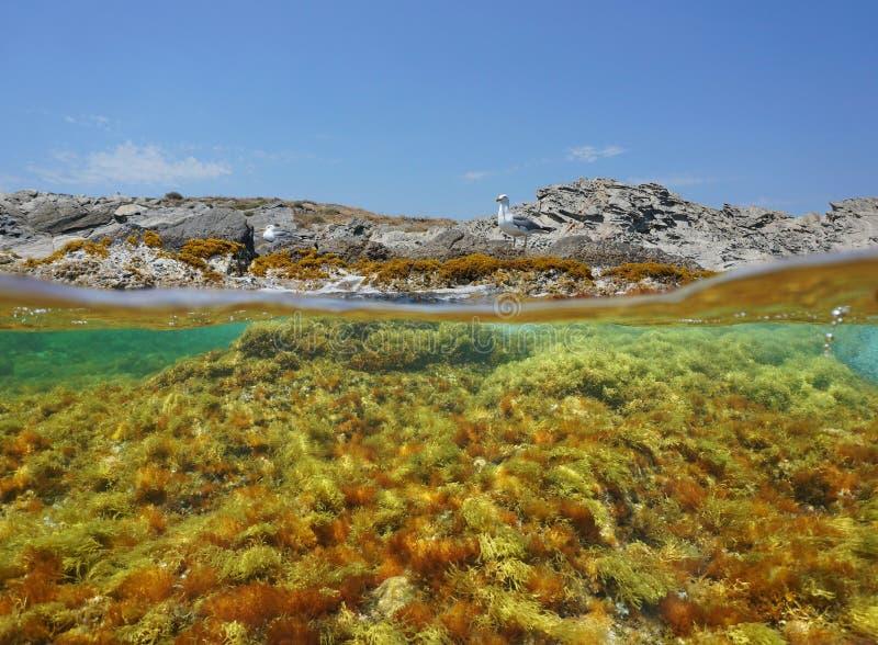 Gaivota do litoral e Espanha subaquática do mar das algas foto de stock