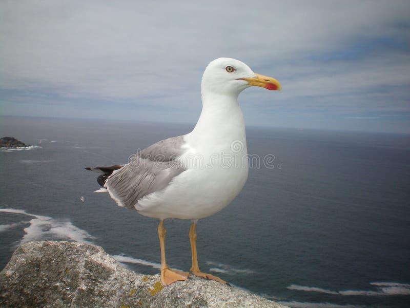 Gaivota do pássaro fotografia de stock royalty free