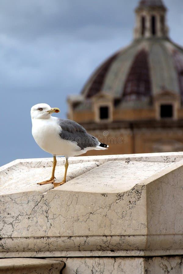 Gaivota do pássaro que senta-se em um suporte de mármore em um fundo de uma abóbada fotografia de stock royalty free