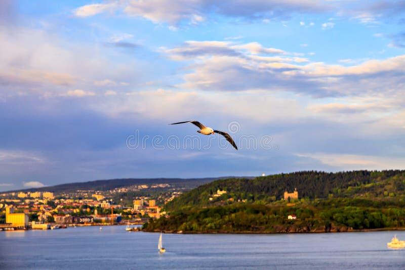 Gaivota do voo contra o céu e a cidade fotografia de stock royalty free