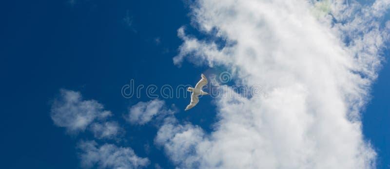 Gaivota e nuvens 01 foto de stock