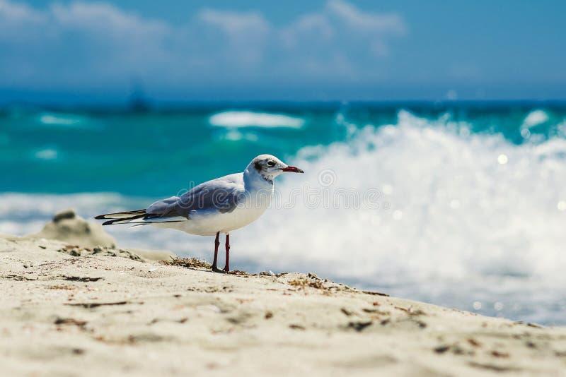 Gaivota em Sandy Beach fotos de stock