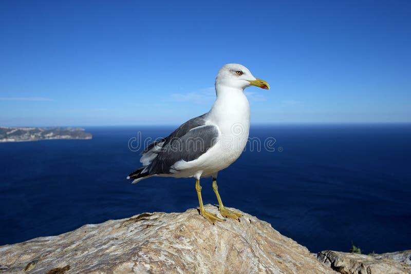 Gaivota em uma rocha pelo mar imagens de stock royalty free