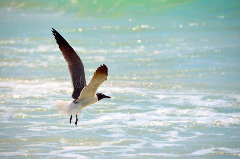 Gaivota em voo com backdop do oceano imagem de stock
