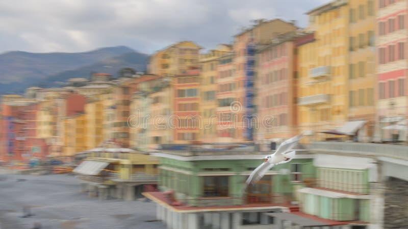 Gaivota em voo e o fundo colorido das casas de Camogli, Liguria, Itália imagem de stock