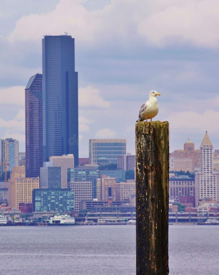 Gaivota empoleirada na pilha na frente da skyline de Seattle foto de stock